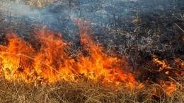Возгорание сухой травы привело ккрупному природному пожару под Оренбургом