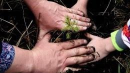 Более пяти тысяч деревьев высадили вИркутской области врамках экомарафона