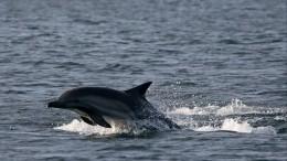 НаФарерских островах убили более 1500 дельфинов