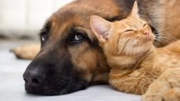 Хвост удачи: вРоссии появился онлайн-сервис для умного поиска домашних животных