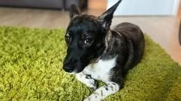 Ваэропорту «Домодедово» нашлась пропавшая собака Ева
