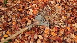 Ивмагазин ненадо: Изчего можно сделать технику для уборки листьев иветок?