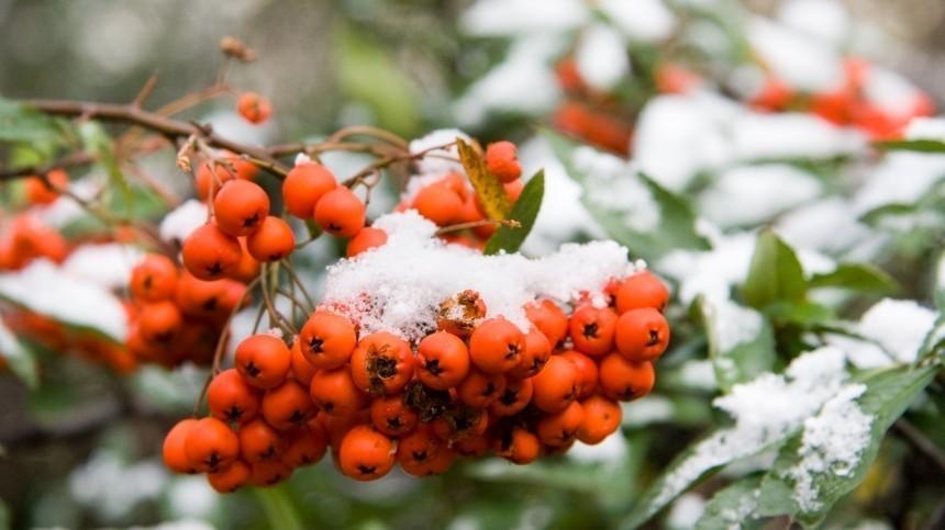 Климатолог рассказал, вкаких регионах ждать сильных морозов