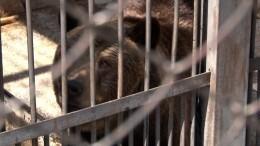Массовое отравление животных зафиксировали вЧелябинском зоопарке