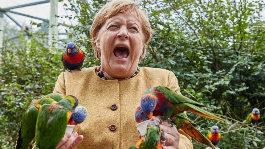 Фото атакованной попугаями Ангелы Меркель стало интернет-мемом
