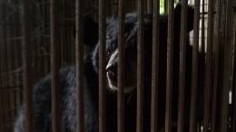 Аскольд Запашный назвал предполагаемых убийц животных взоопарке Челябинска