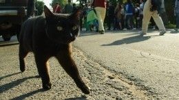 Спасатели вызволили изплена кота, который ждал помощи после взрыва вНогинске