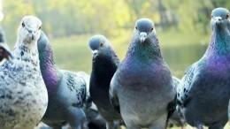 Птицы-убийцы: какими смертельно опасными болезнями можно заразиться отпернатых