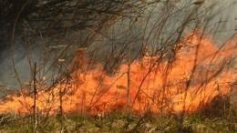 Жители деревни под Екатеринбургом едва спасли свои дома отлесного пожара