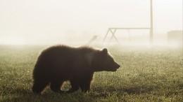 Спецоперацию поубийству жившего напомойке медведя провели наКурилах