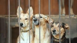 Сотрудники приюта вЧехове заявили онамеренном отравлении собак: «Это диверсия»