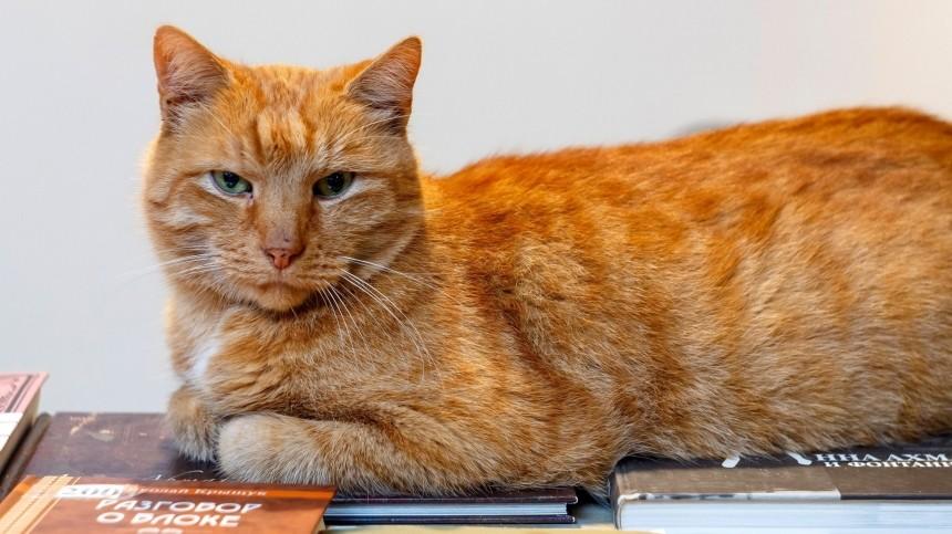 ВПетербурге потерялся старший кот музея Анны Ахматовой
