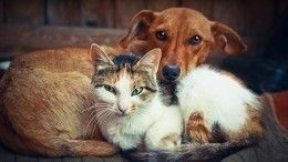 Как поповедению животного предугадать приближение болезни или смерти хозяина