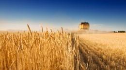 Путин поручил втечение 10 лет обеспечить аграриев российскими семенами на75%