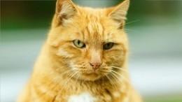 Потерянный талисман: почему пропажа кота измузея Ахматовой может обернуться его смертью