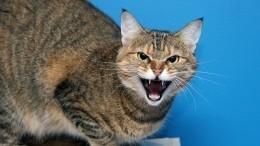 Кошки искусали лицо умершей хозяйки вМоскве