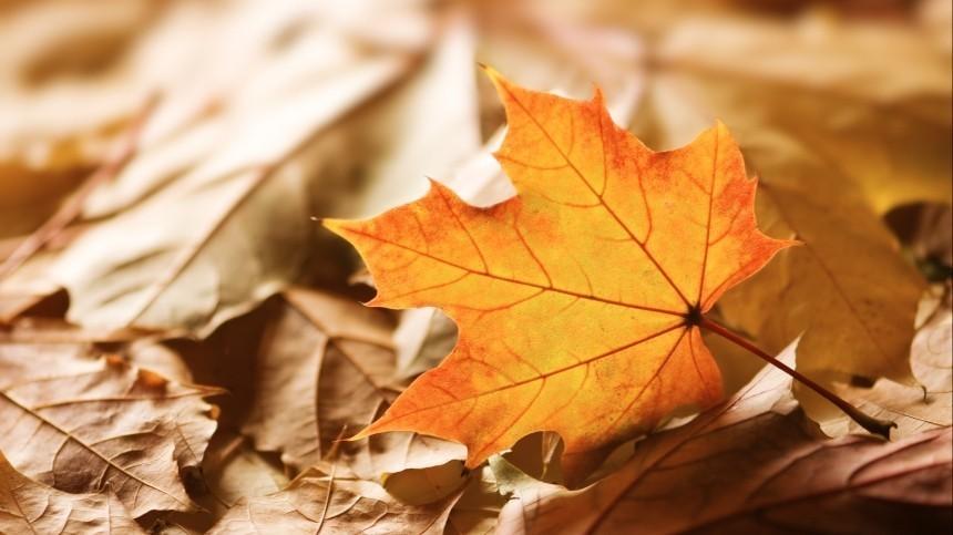 Листья-убийцы? Какие болезни провоцирует шуршащая осенняя листва