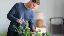 Подоконник изобилия: ТОП-5 овощей для выращивания вквартире