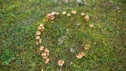 Ведьмин круг: откуда появляются мистические кольца изгрибов