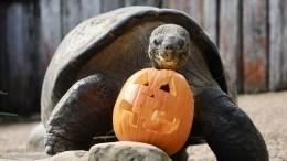 Животные получили потыкве взоопарке американского Орегона