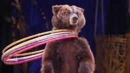 Ворловском цирке назвали причину нападения медведя набеременную дрессировщицу