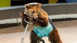 Дрессировщик рассказал, почему медведь обожал беременную Пересильд