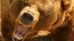 Кровавая бойня: житель Тюмени зарезал ножом напавшего нанего дикого медведя