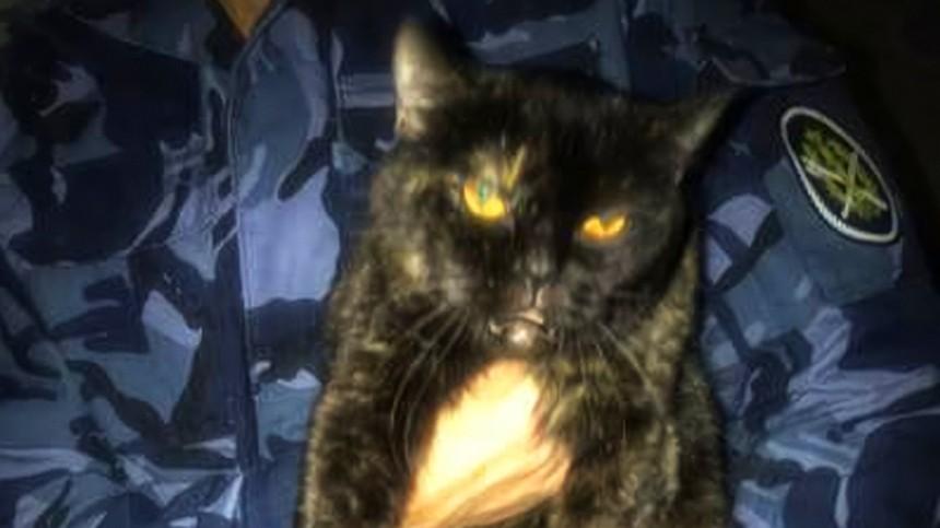 Кота-наркокурьера поймали вИвановской области