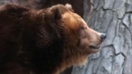 Тренер зарезавшего медведя вкровавой схватке тюменском боксере: «Ничего героического»