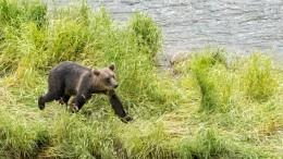Опубликовано фото израненного боксера, зарезавшего ножом дикого медведя