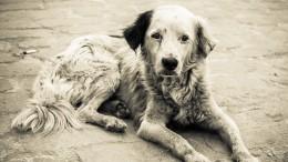 Неизвестные убили около 20 собак вприюте для животных вВоронеже