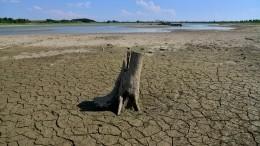 Климатолог предупредил опроблемах сводой иросте засух вРоссии