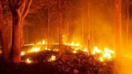 ПоЛикийской тропе втюрьму: туристов изРФарестовали вТурции из-за пожара